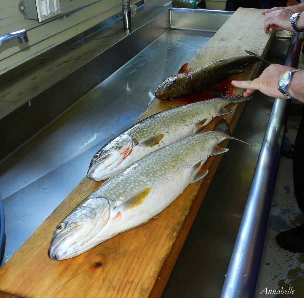 Prises (poisson) sur le lac Waconichi