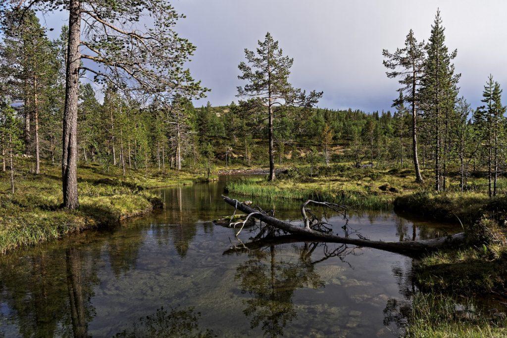 la rivière Savioja dans le Parc National Urho Kekkonenfinlande