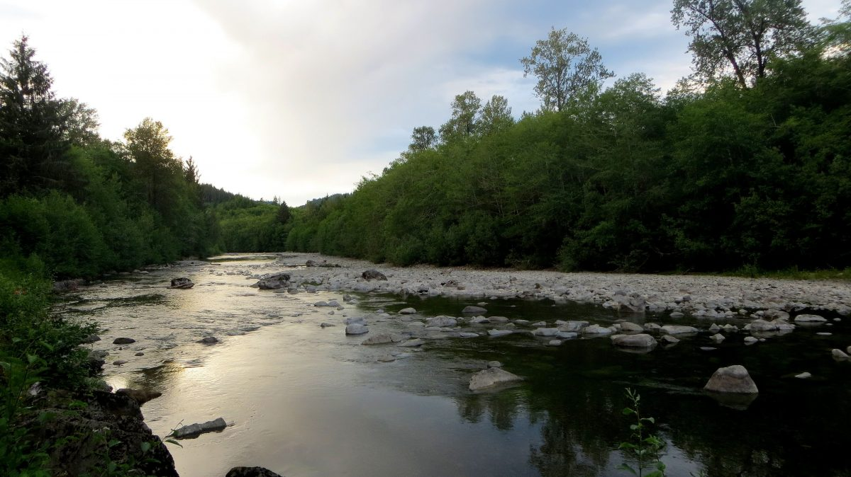 Pêche dans le Washington sur la Bogachiel River en été
