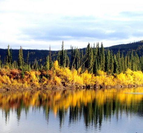 Rivière Porcupine, Yukon