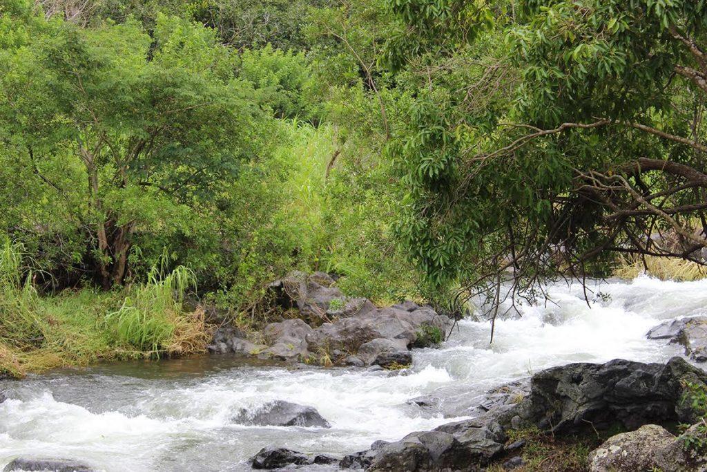 Rivière à la Réunion