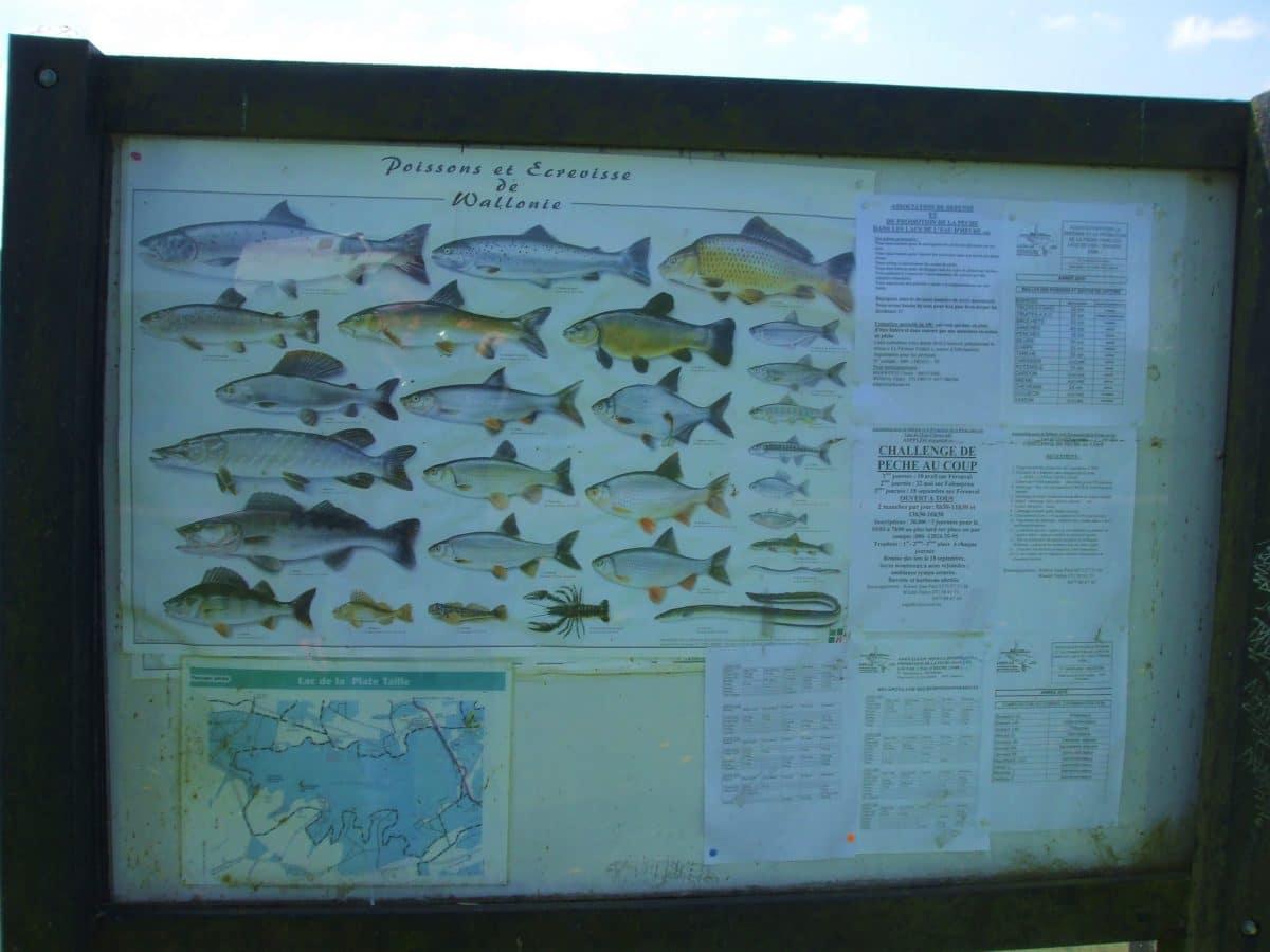 tableau de poissons - Lacs de l'Eau d'Heure - Wallonie