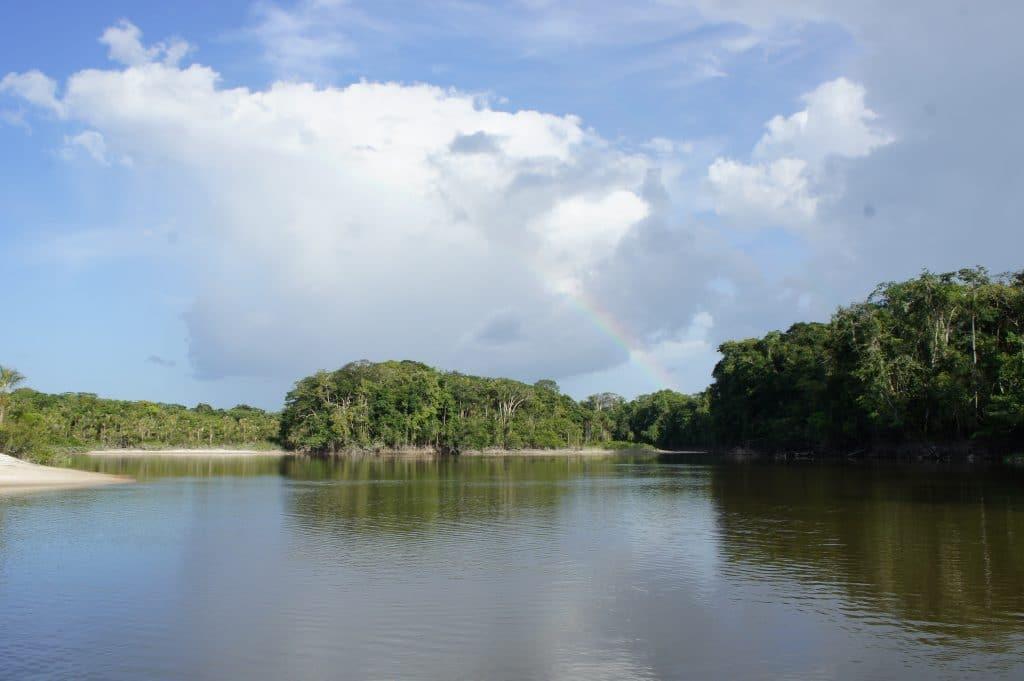 Paysage du Brésil, sur les rives du Rio Negro