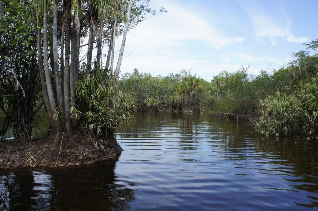 spot de pêche de peacock bass sur le Rio Negro