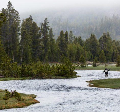 Pêcheur à la mouche sur le ruisseau Nez Perce