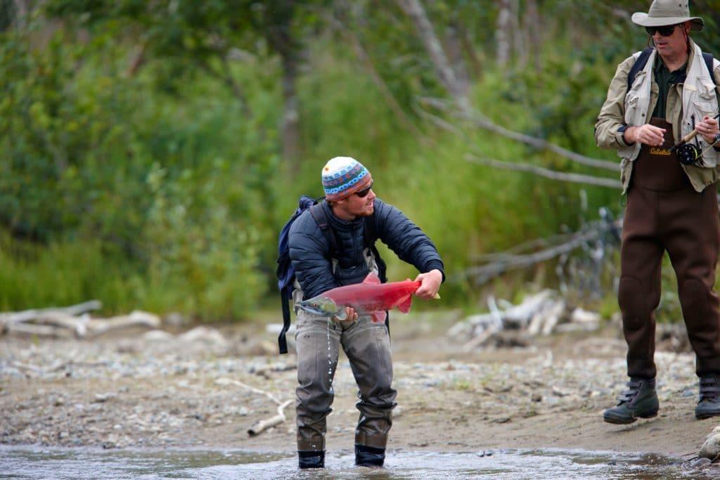 Saumon rouge attrapé dans le pêché dans le national de Katmai