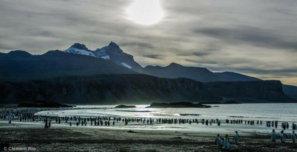 Des pinguouins dans ces paysages sublimes des Kerguelen
