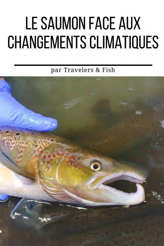 La saumon face aux changements climatiques