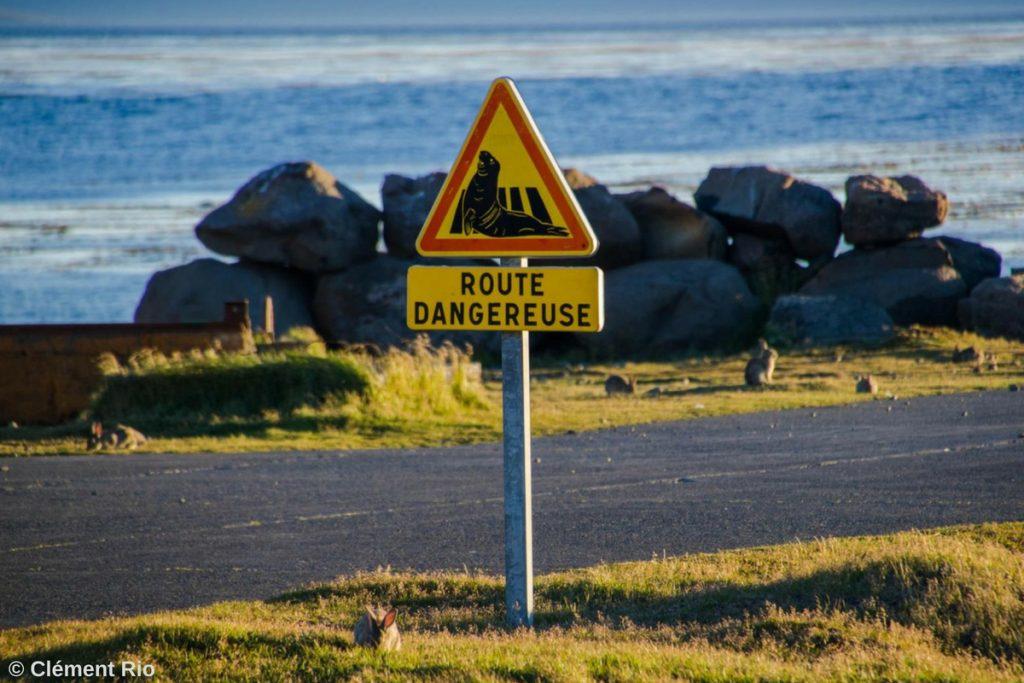 Route dangeurese - phoques sur la route - îles Kerguelen
