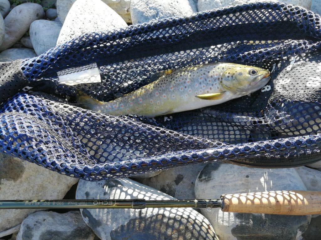 Fario pêchée dans la rivière Yellowstone, au niveau de Carterbridge