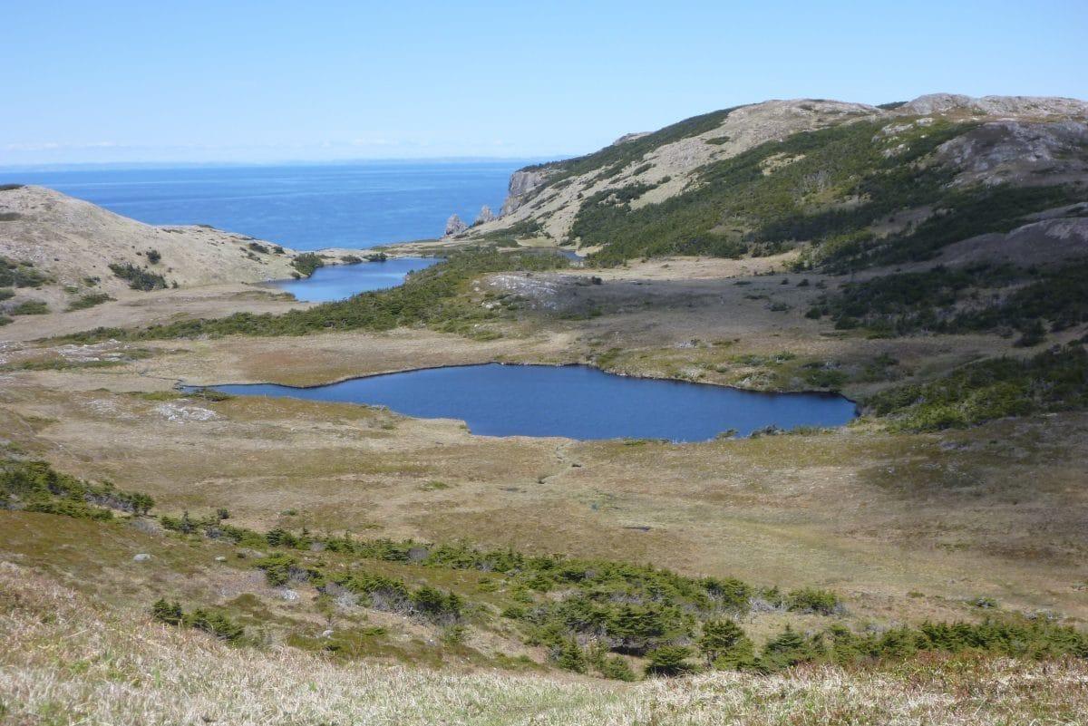 Etang de la Cormorandière (Miquelon)