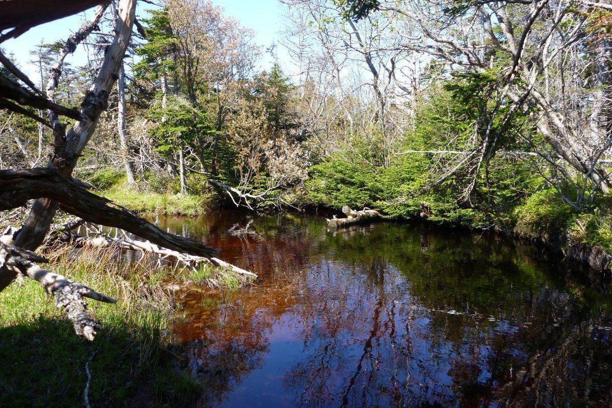 Pêche à Saint-Pierre-et-Miquelon - Ruisseau Sylvain (Miquelon)