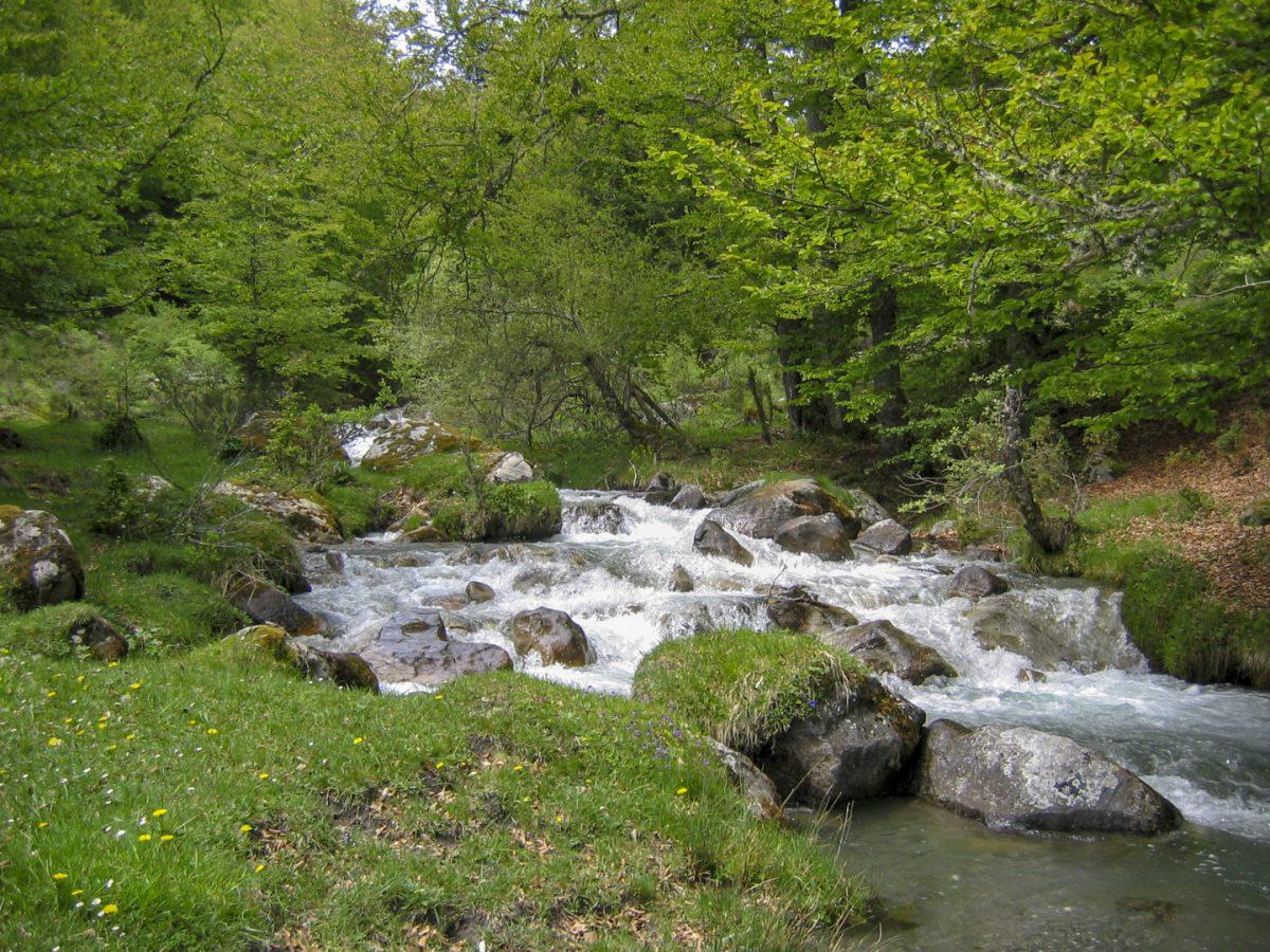 Pêche sur l'Adour de Payolle en Hautes-Pyrénées
