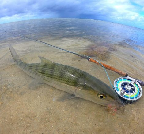 Pêche du bonefish en Guadeloupe