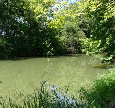 Pêche dans le Gers, sur la Baïse