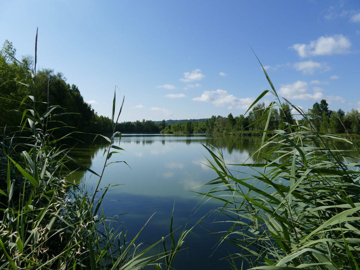 Pêche sur le plan d'eau de Pellissier