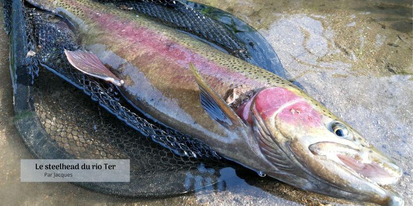 Pêche à la mouche sur le rio Ter en Catalogne