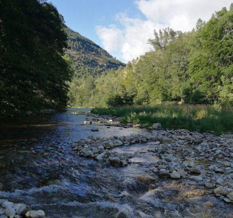 Pêcher la truite en Lozère sur la rivière Tarn