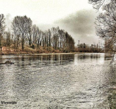 Le gave de Pau, une rivière pour les saumons